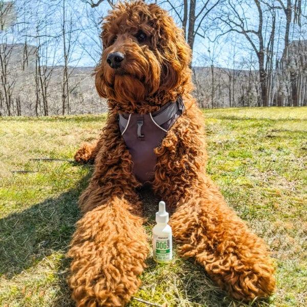 hempzilla dog cbd tincture2 Hempzilla CBD