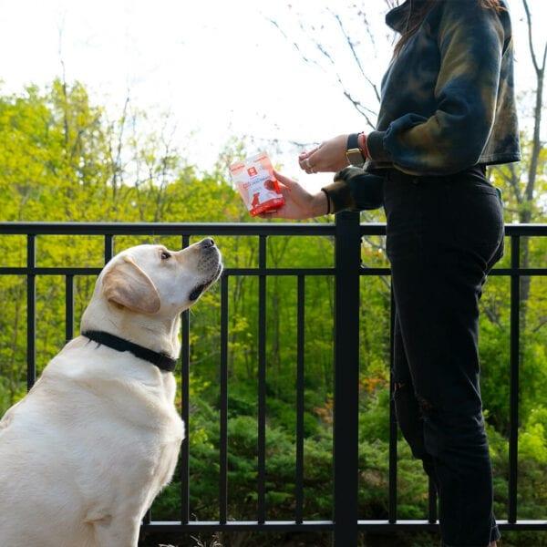 dog treats alt 4 Hempzilla CBD